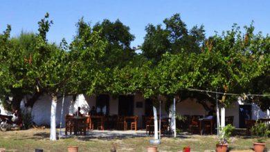 Photo of Τα Παλιά Καφενεία της Λήμνου