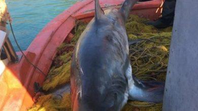 Photo of Ψάρεψε Καρχαρία 4 μέτρα !