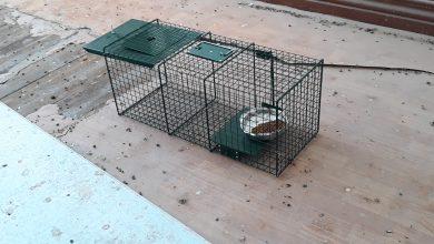 "Photo of Με φακα για γατες αντι για ποντικια η ""επιχείρηση σωτηρία"""