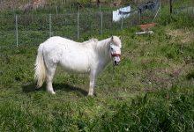 Photo of Το Άλογο της Λημνου!  Τι κάνουμε για να μην εξαφανιστεί;