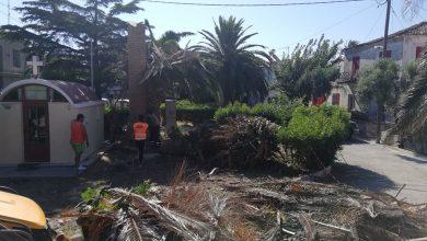 Photo of Διορθωτικό:  Έκοψαν το Φοίνικα του Αγ. Νικολάου…κατόπιν αιτήματος των κατοίκων