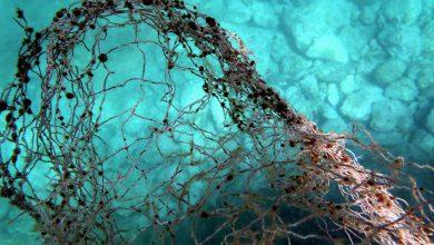 Photo of Δίχτυα και άλλα αντικείμενα στο βυθό της θάλασσας