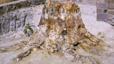 Photo of Απολιθωμένο δάσος Λέσβου – νέα ευρήματα