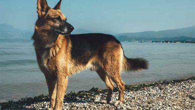 Photo of Οι Φόλες με θύματα σκύλους –  Η Κάρμεν του ΜΥΡΟΒΛΗΤΗ