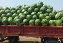 Photo of Καρπούζι – το φρούτο του καλοκαιριού