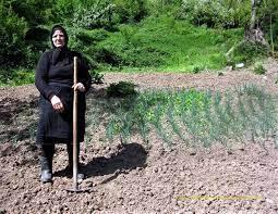 Photo of 15 Οκτωβρίου Παγκόσμια Ημέρα Ελληνίδας Αγρότισσας